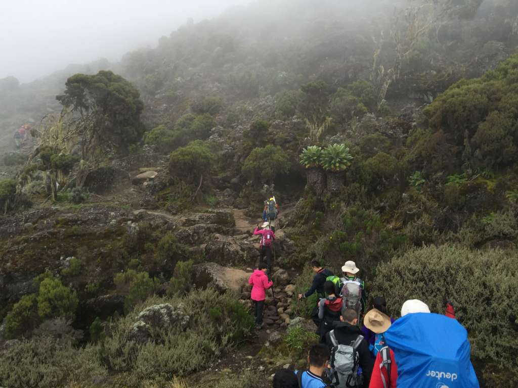 Machame Route scenery (Day 2)